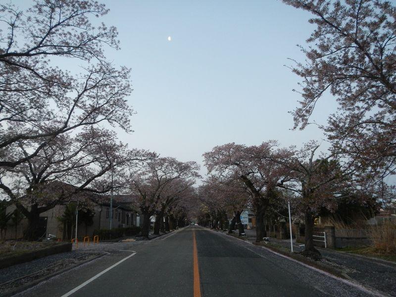 20180408_夜ノ森の桜