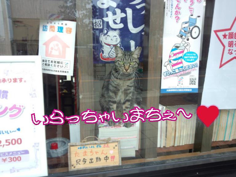 いらっちゃ~い♥ (たまちゃん)