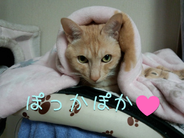 ぽっかぽか♥ (いち君)