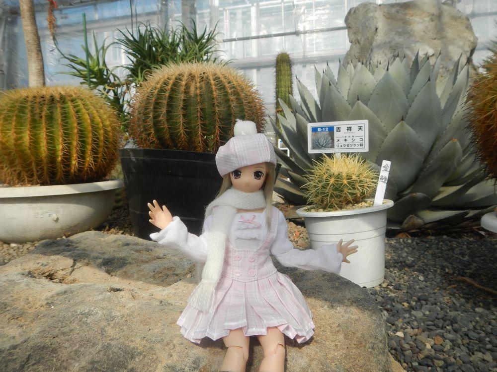 20200203_逢瀬公園サボテン温室