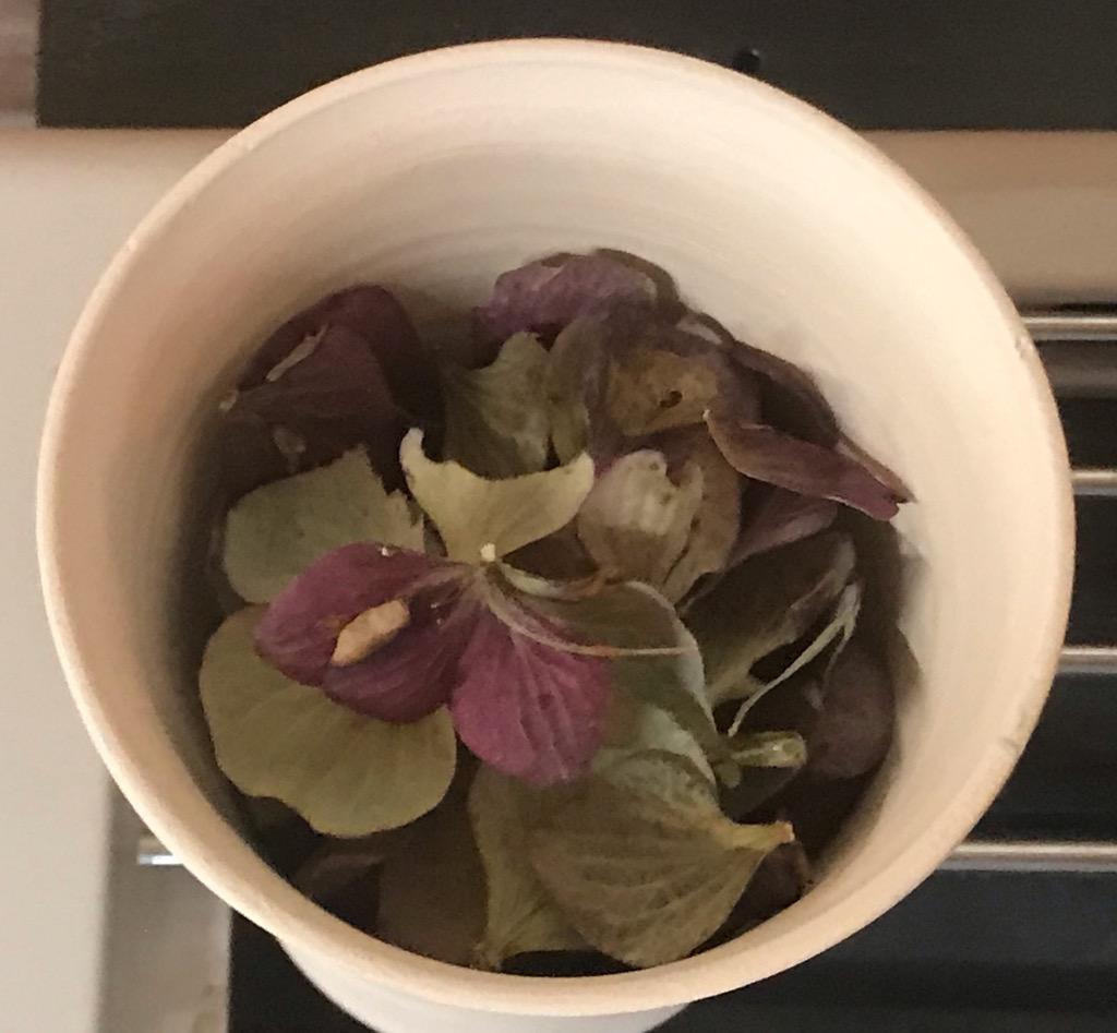 萼紫陽花の花びら