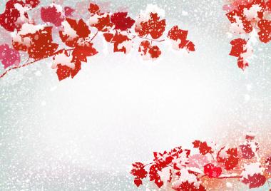 秋の花々(D)